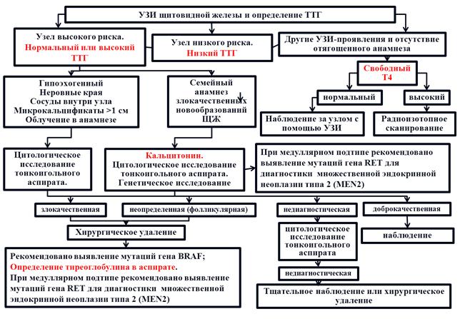 Повышенные антитела к ат-тпо